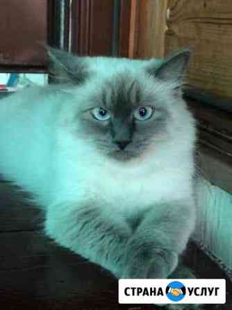 Ищу котика на вязку Волгоград