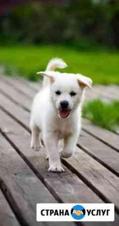 Выгул собак Пермь