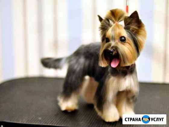 Стрижка кошек, собак и кроликов нновгород и обл Нижний Новгород