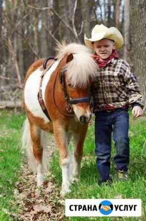 Прогулки на лошадях, обучение верховой езде Ульяновск