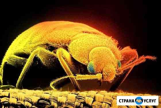 Уничтожение комаров клещей тараканов. Дезинфекция Курган