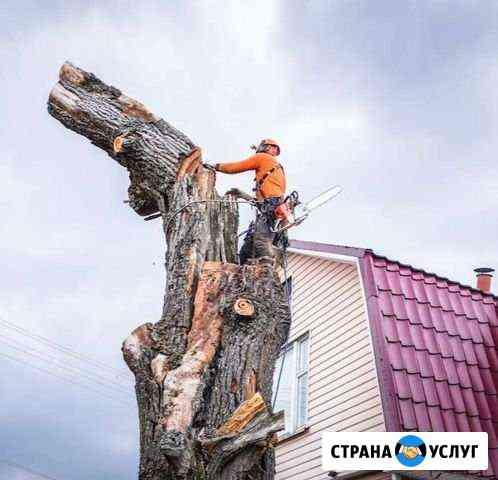 Спил деревьев. Спилить дерево Брянск