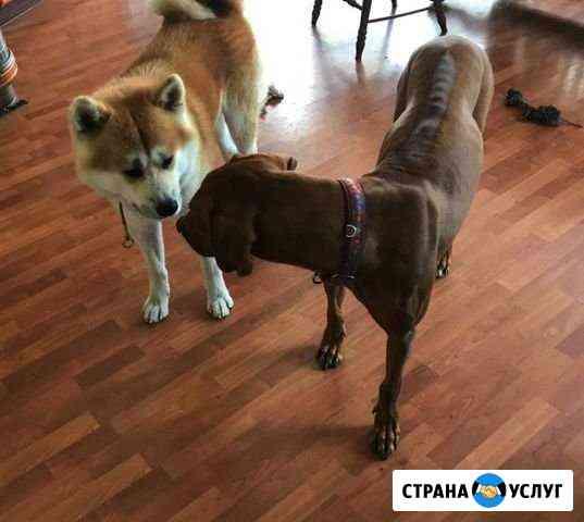 Воспитание крупных пород собак/ дресировщик Казань