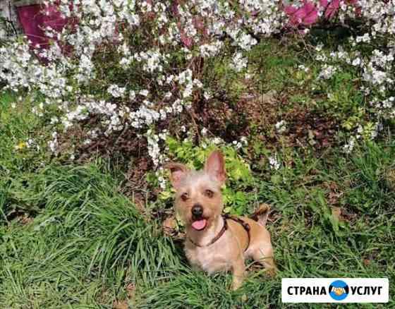 Выгул собак Амурск