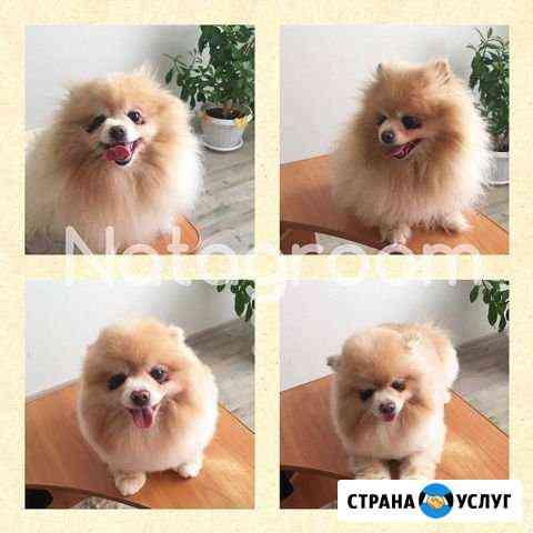 Стрижка собак Екатеринбург
