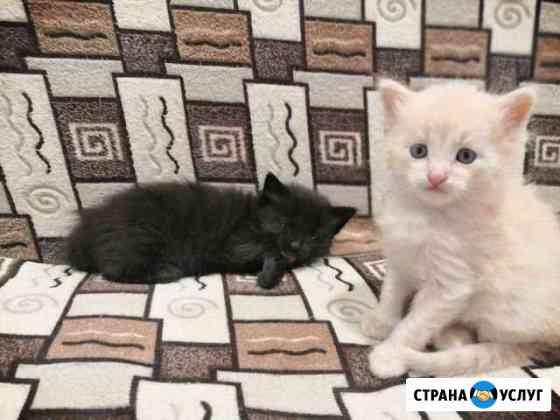 Кошки Павловск