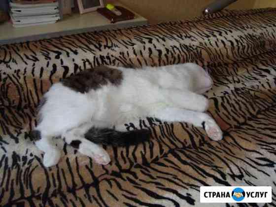 Передержка животных Кемерово