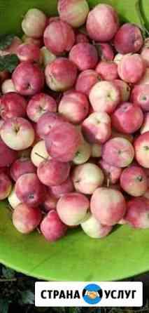 Яблочки Новые Зори