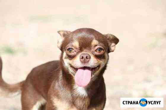 Передержка собак Самара