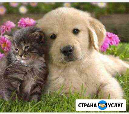 Присмотр за животными Новошахтинск