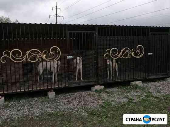 Передержка для собак Владикавказ