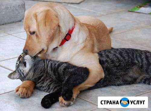 Стрижка кошек и собак Стерлитамак