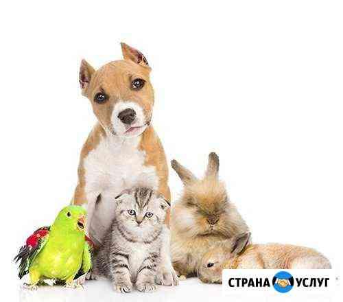 Ветеринар. Ветеринарная помощь с выездом на дом Екатеринбург