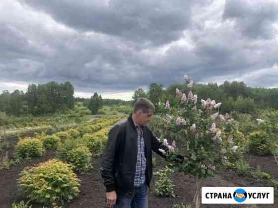 Озеленение. Благоустройство Красноярск