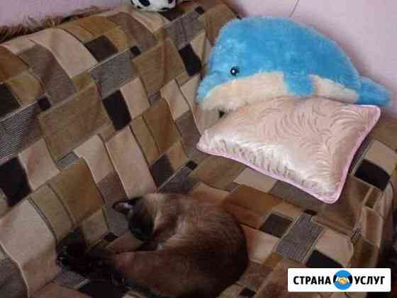 Передержка животных Рыбинск