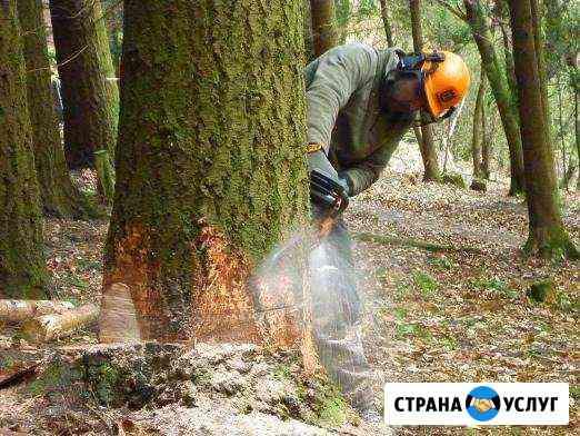 Спил обрезка кронирование аварийных деревьев Омск