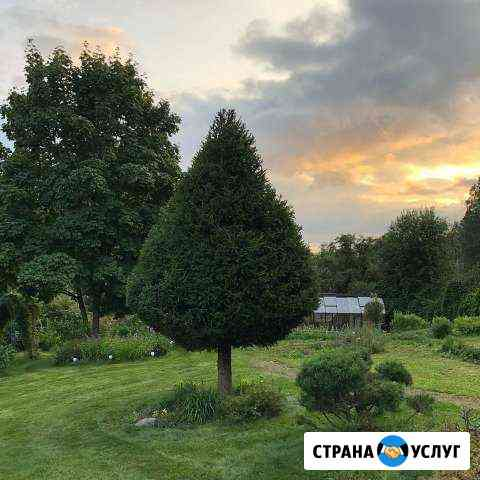 Садовник. Уход за садом. Обрезка, стрижка деревьев Йошкар-Ола