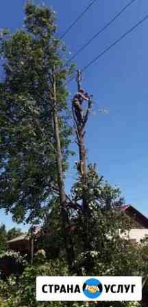 Опиловка спил, кронирование деревьев в Иваново Иваново