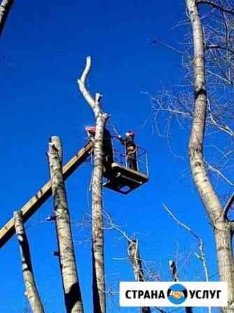 Удаление аварийных деревьев Новодвинск
