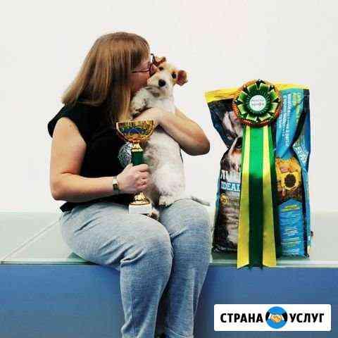 Груминг, тримминг собак Лесколово
