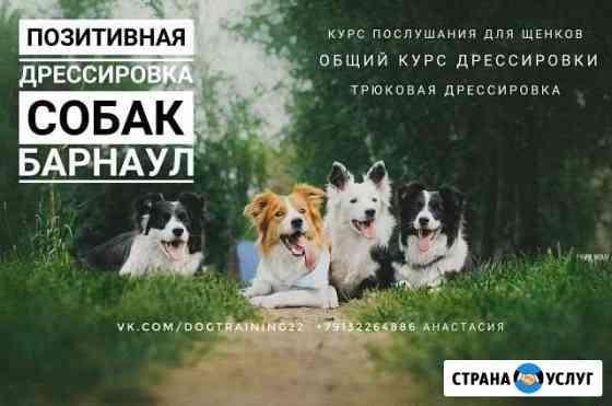Дрессировка и передержка собак Барнаул