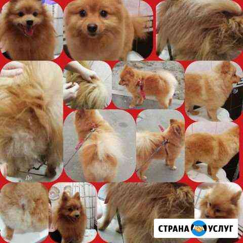 Стрижка собак и кошек. Тримминг животных. Линька Казань