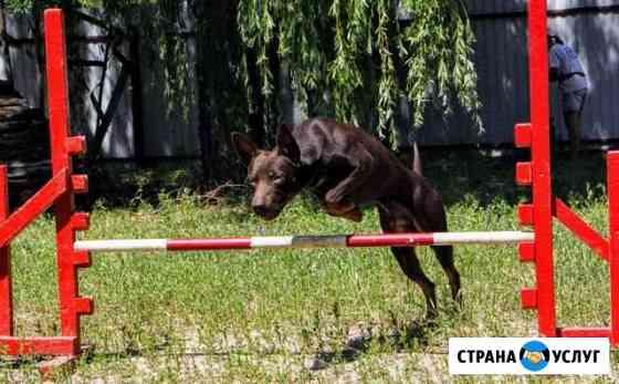 Дрессировка собак Воронеж