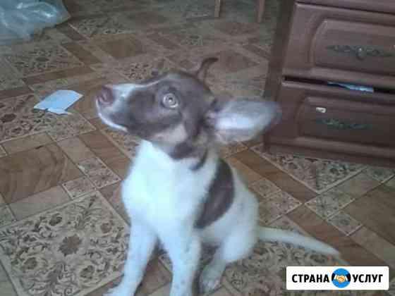 Собака Курган