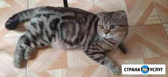 Ждем кошечку Тольятти