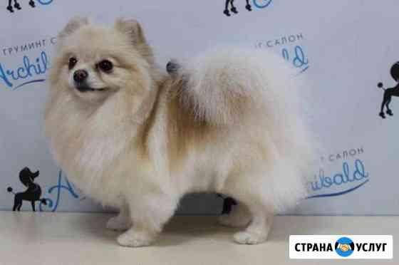 Стрижка собак и кошек Новокузнецк