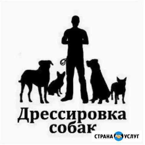 Дрессировщик-кинолог подготовка к выставкам и Аджи Нижний Тагил