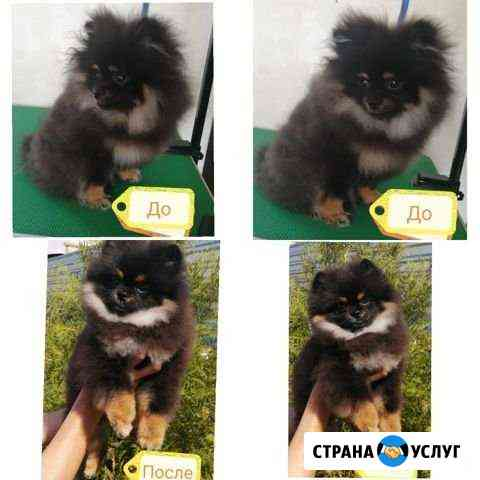 Стрижка собак. Груминг Волгодонск