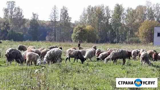 Специалист по стрижке овец Иваново