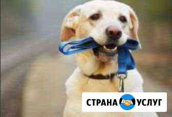 Выгул собак Хабаровск