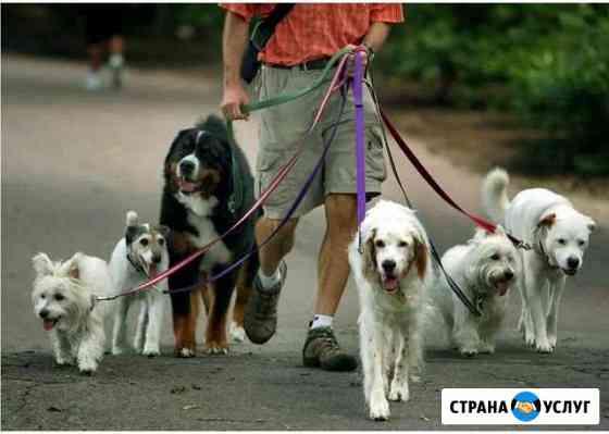 Выгул собак Белгород