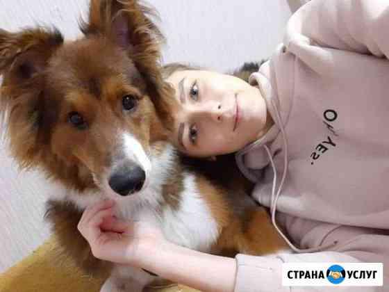 Передержка / гостиница для животных Белгород