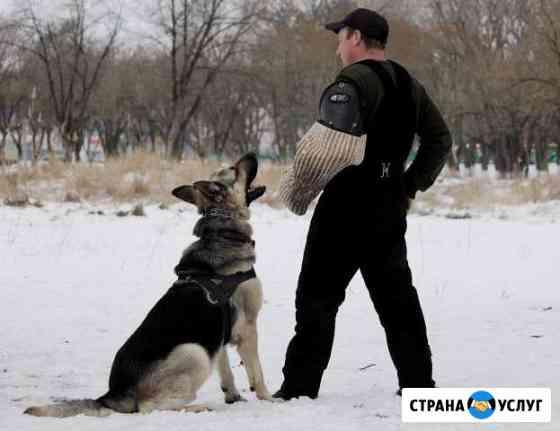 Дрессировка собак Армавир