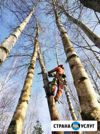 Спилить удалить дерево (пень) Покров