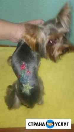 Стрижка маленьких собак Саратов