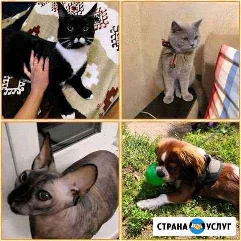 Домашняя передержка для кошек и собак, Дружок Кострома