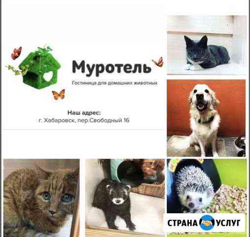 Передержка кошек и собак Хабаровск