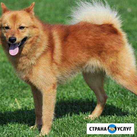 Выгул собак Новосибирск