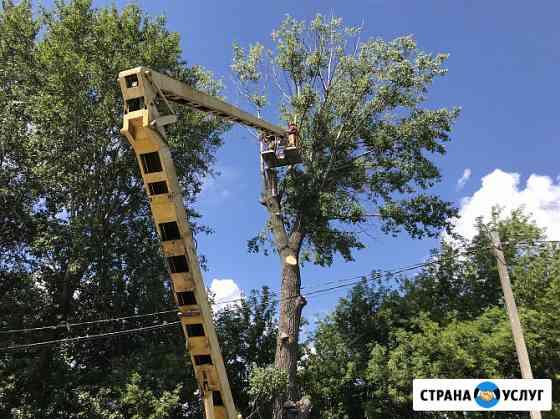 Спил и обрезка деревьев в Курске и области Курск