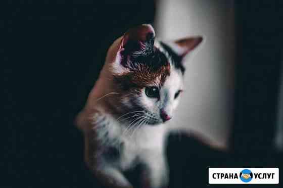 Передержка кота/кошки Тюмень