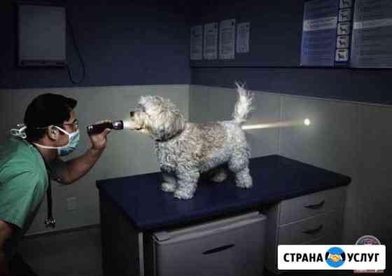 Ветеринарный врач Ольховка