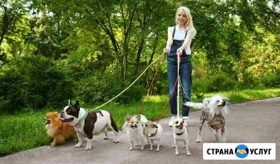 Выгул домашних животных Киров