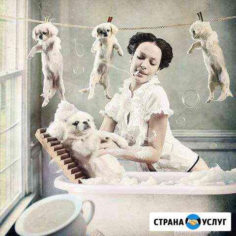 Стрижка собак и кошек Гидроторф