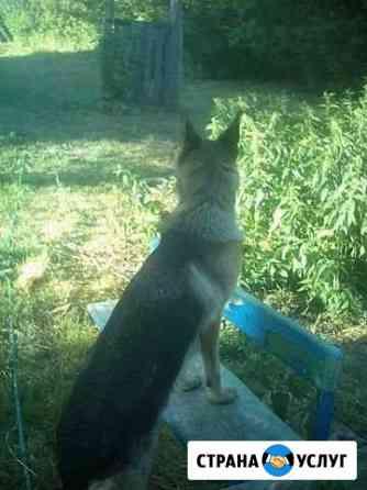 Обучение собак и щенков Тамбов