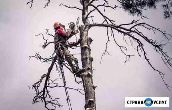Профессиональный спил деревьев, расчистка участков Томск