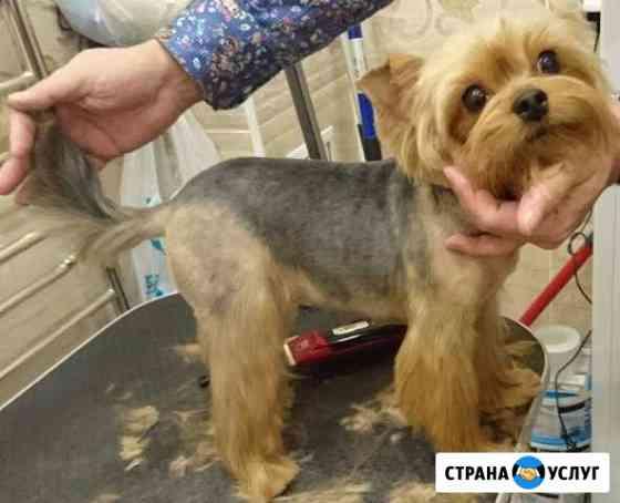 Стрижка, проф. грумер для кошек и собак, выезд Екатеринбург